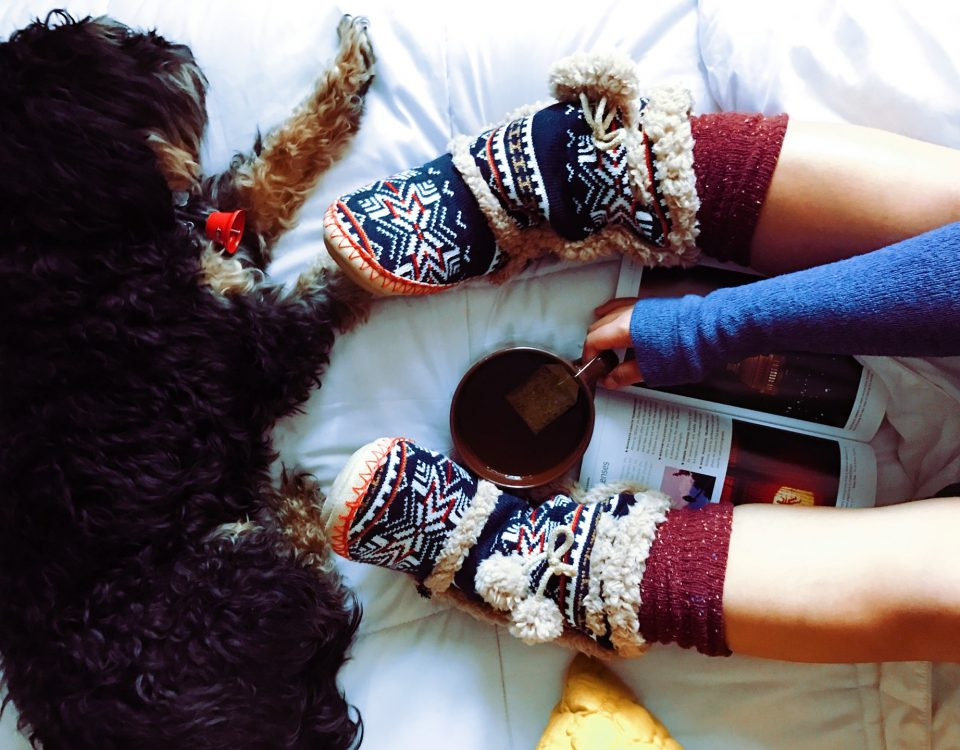 pet supplies and jumpers to keep your pet warm this winter