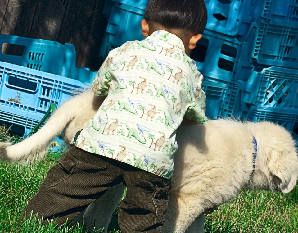 family pets and pet products